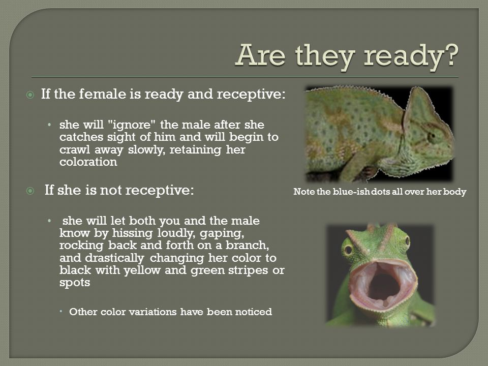Are they ready If the female is ready and receptive: