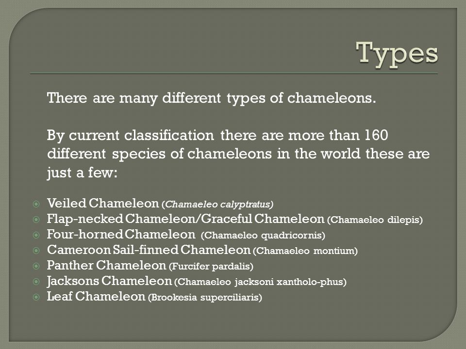 Types There are many different types of chameleons.