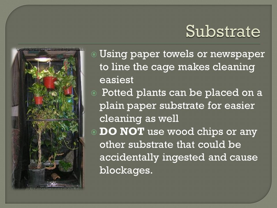 Substrate Using paper towels or newspaper to line the cage makes cleaning easiest.