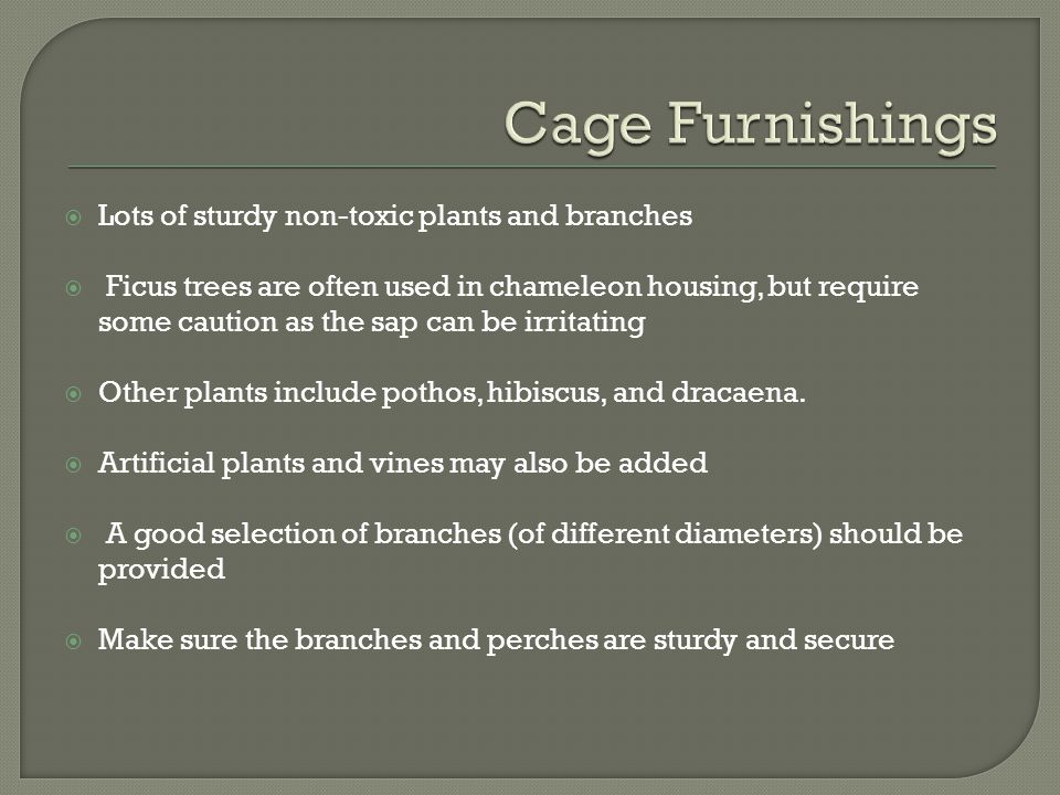 Cage Furnishings Lots of sturdy non-toxic plants and branches