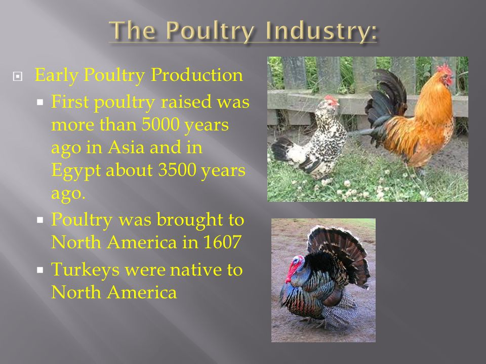 The Poultry Industry: Early Poultry Production