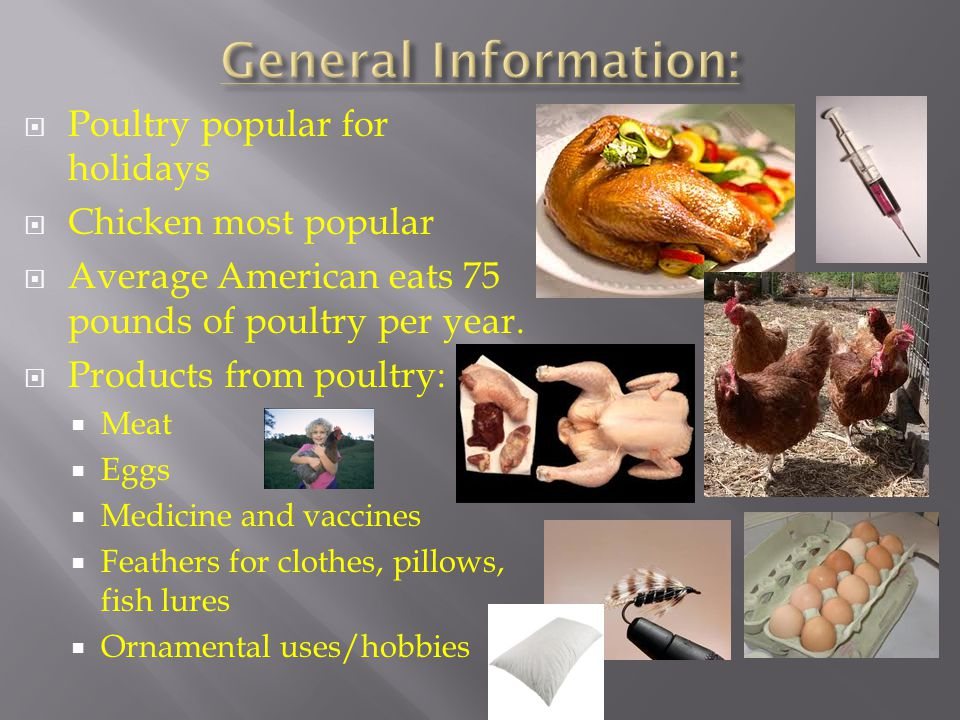 General Information: Poultry popular for holidays Chicken most popular