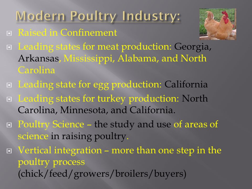Modern Poultry Industry: