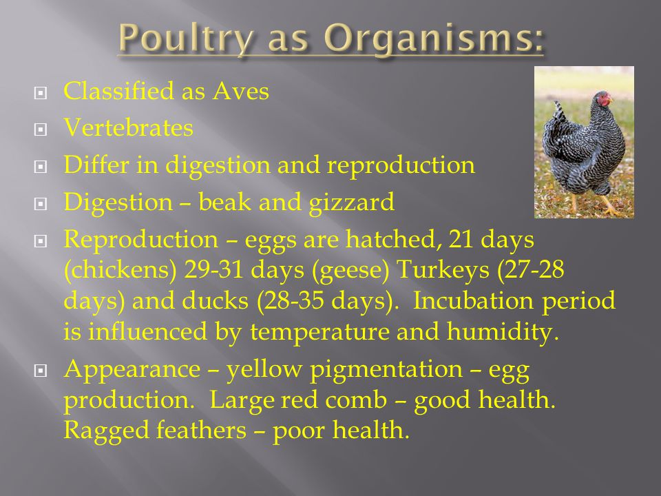 Poultry as Organisms: Classified as Aves Vertebrates
