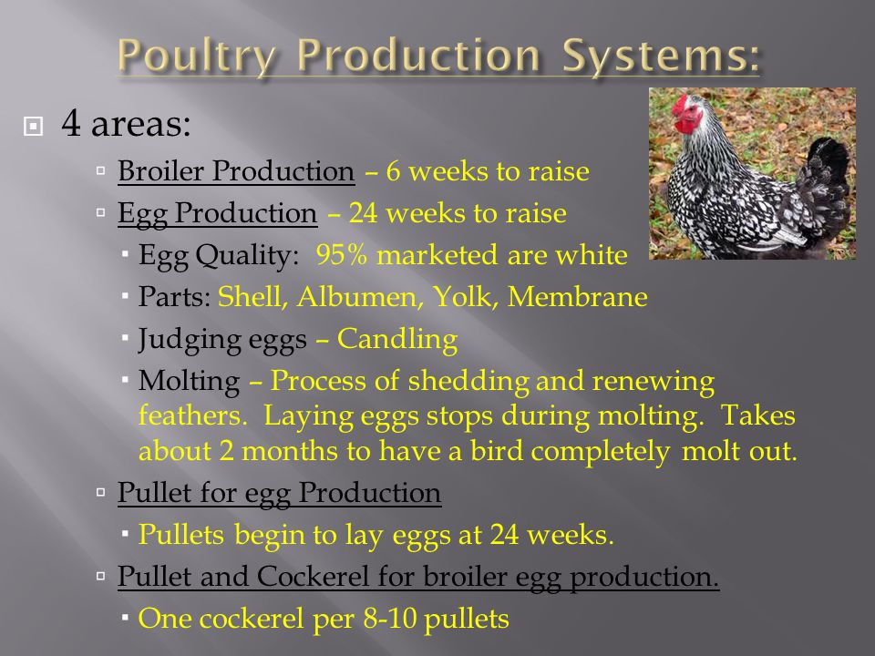 Poultry Production Systems: