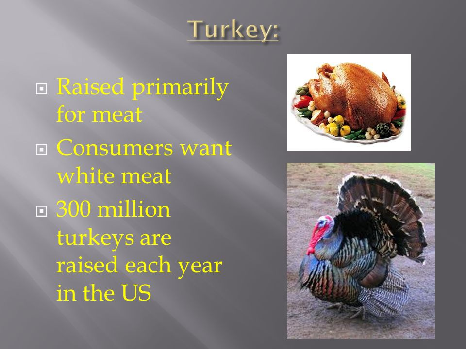Turkey: Raised primarily for meat Consumers want white meat