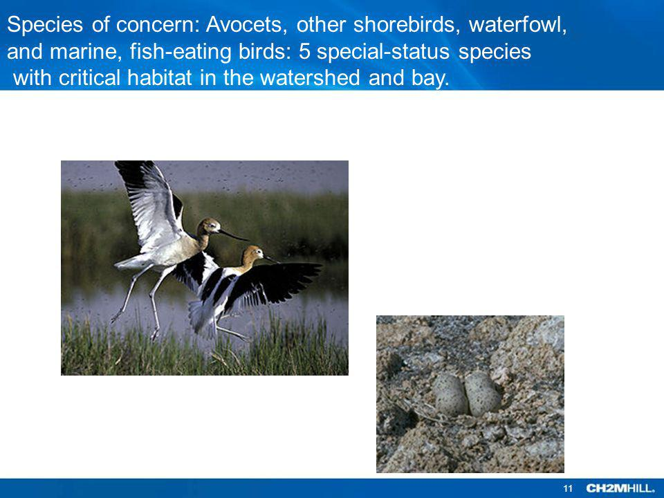 Species of concern: Avocets, other shorebirds, waterfowl,