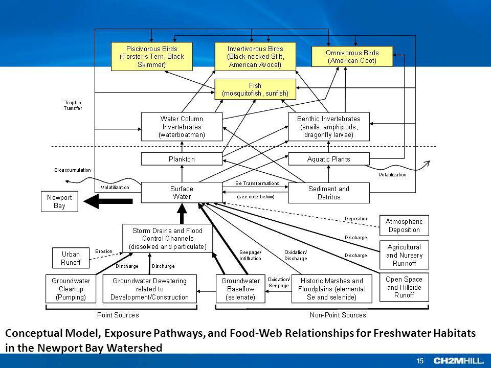 Conceptual Model, Exposure Pathways, and Food-Web Relationships for Freshwater Habitats in the Newport Bay Watershed