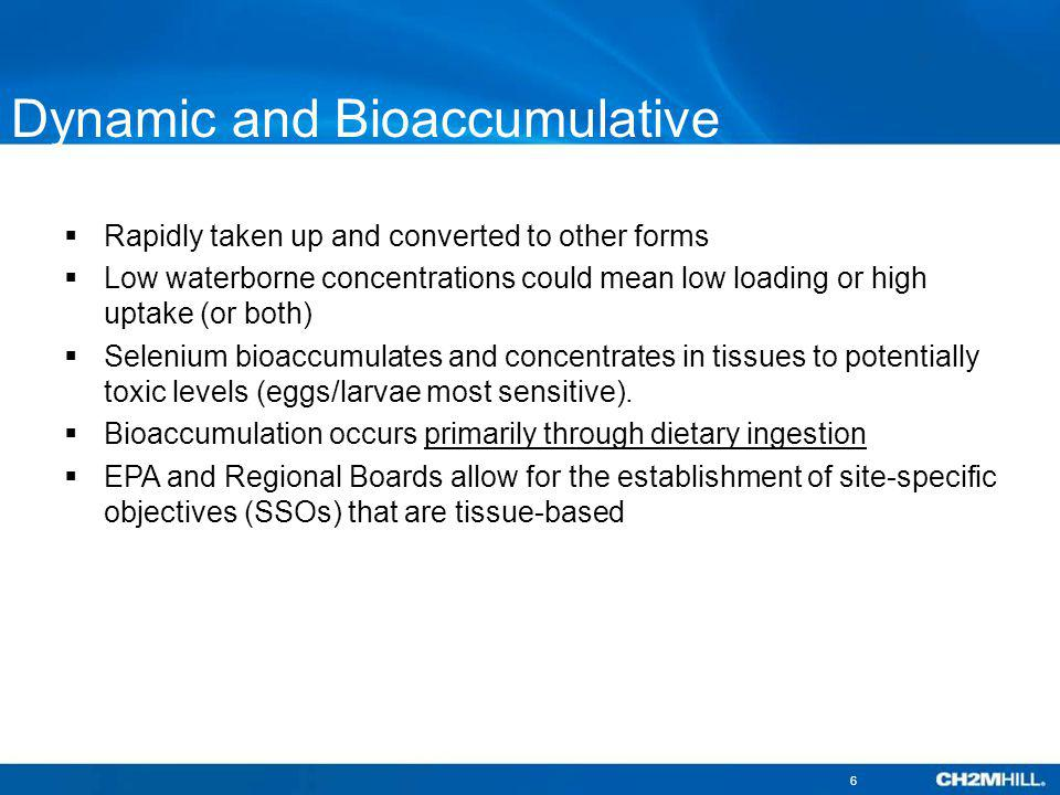 Dynamic and Bioaccumulative