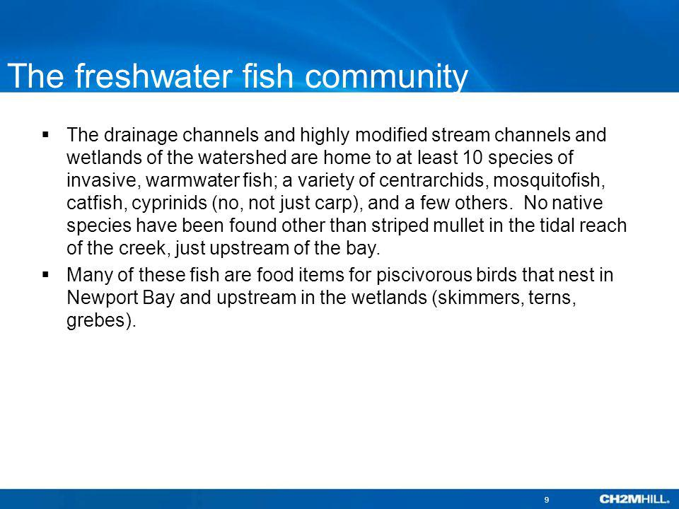 The freshwater fish community