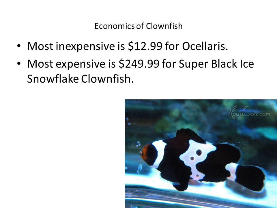 Economics of Clownfish