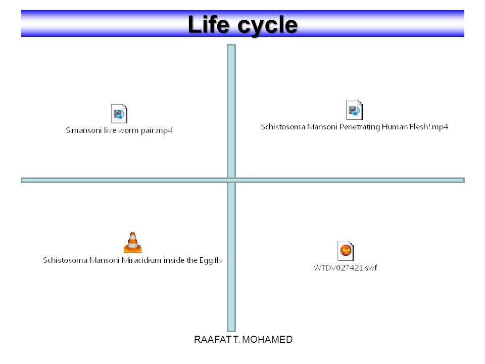 Life cycle RAAFAT T. MOHAMED