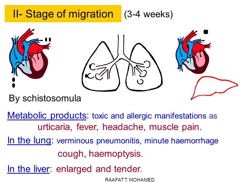 urticaria, fever, headache, muscle pain.
