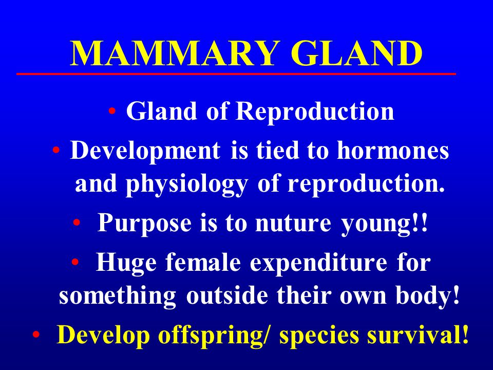 MAMMARY GLAND Gland of Reproduction