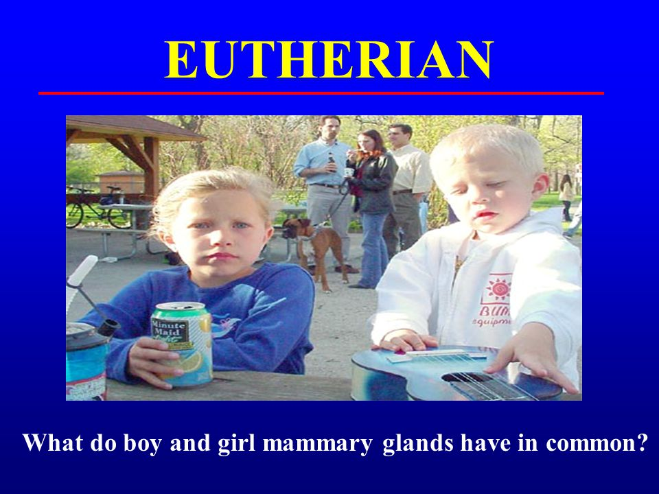 EUTHERIAN What do boy and girl mammary glands have in common