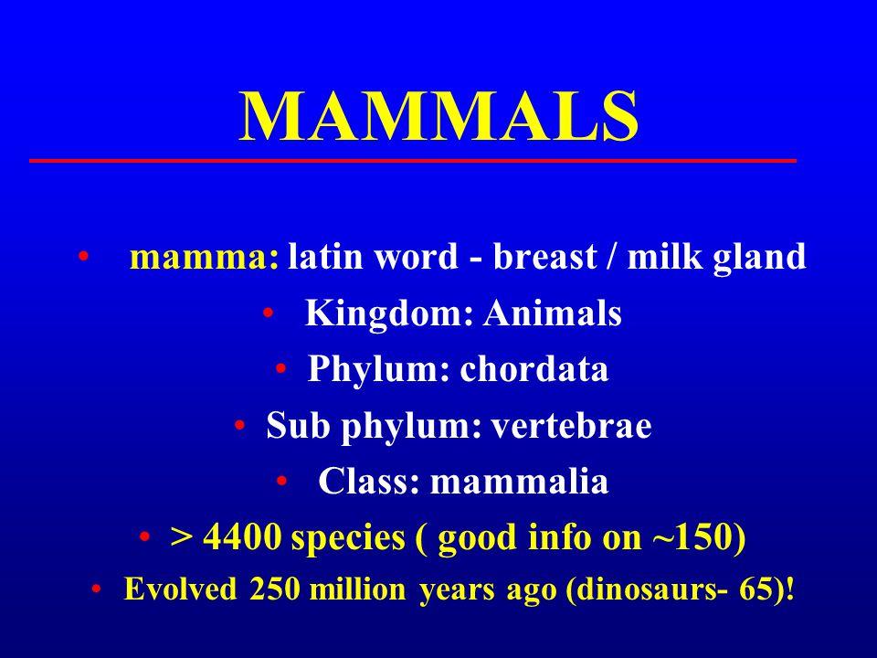 MAMMALS mamma: latin word - breast / milk gland Kingdom: Animals