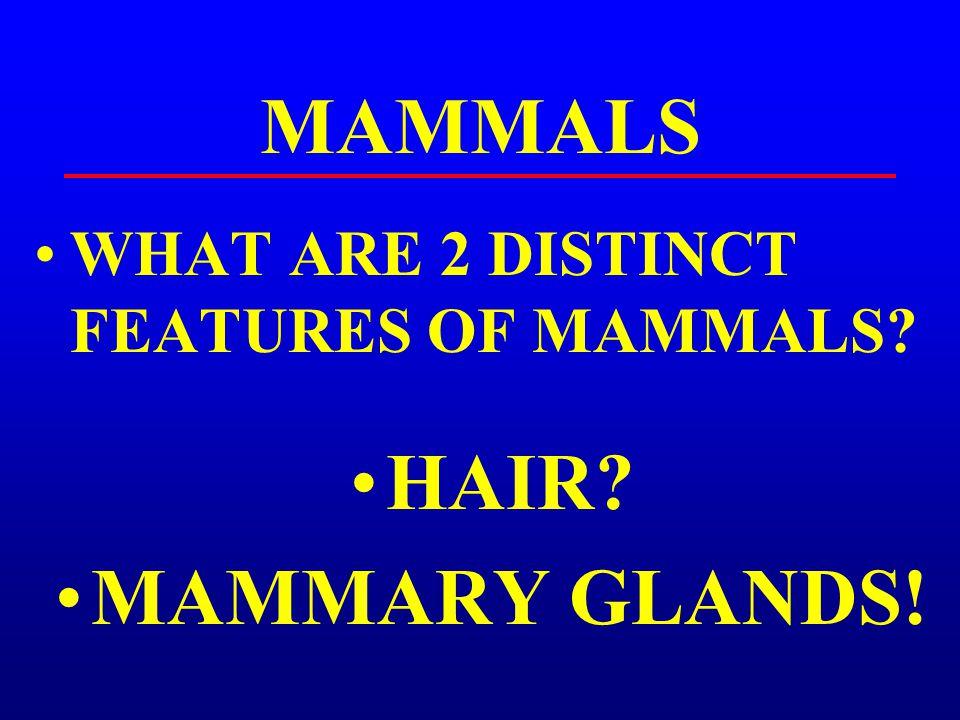 MAMMALS HAIR MAMMARY GLANDS!