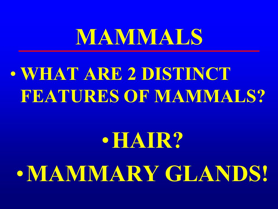 MAMMALS HAIR MAMMARY GLANDS!