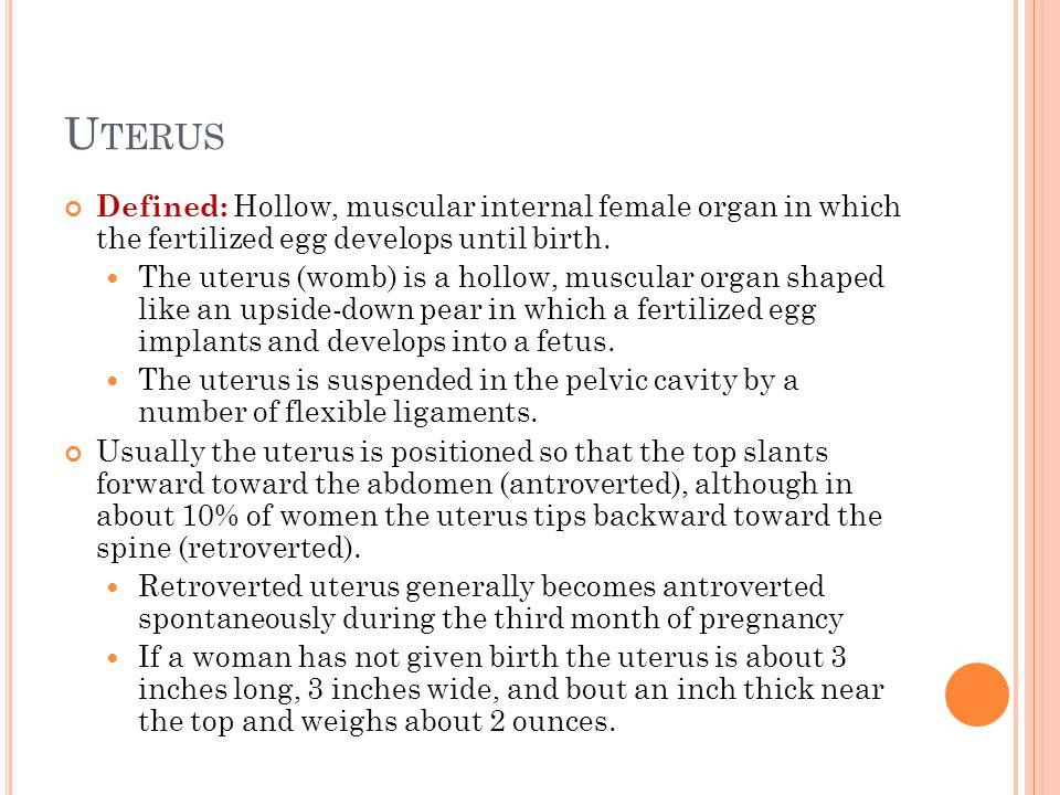 Uterus Defined: Hollow, muscular internal female organ in which the fertilized egg develops until birth.