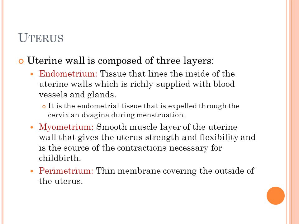 Uterus Uterine wall is composed of three layers: