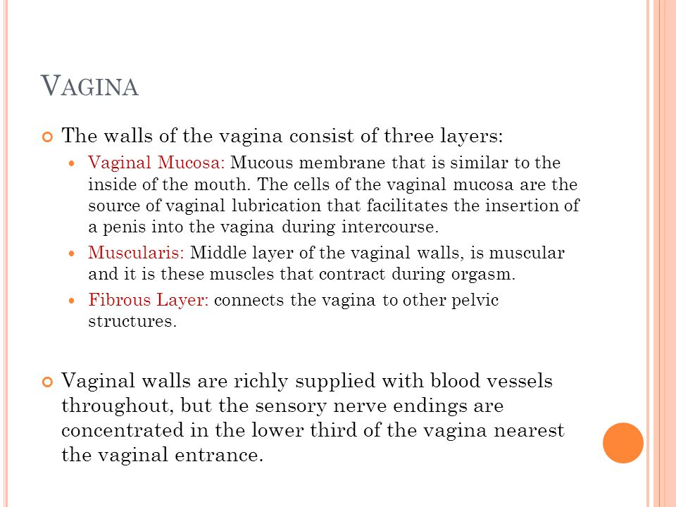 Vagina The walls of the vagina consist of three layers:
