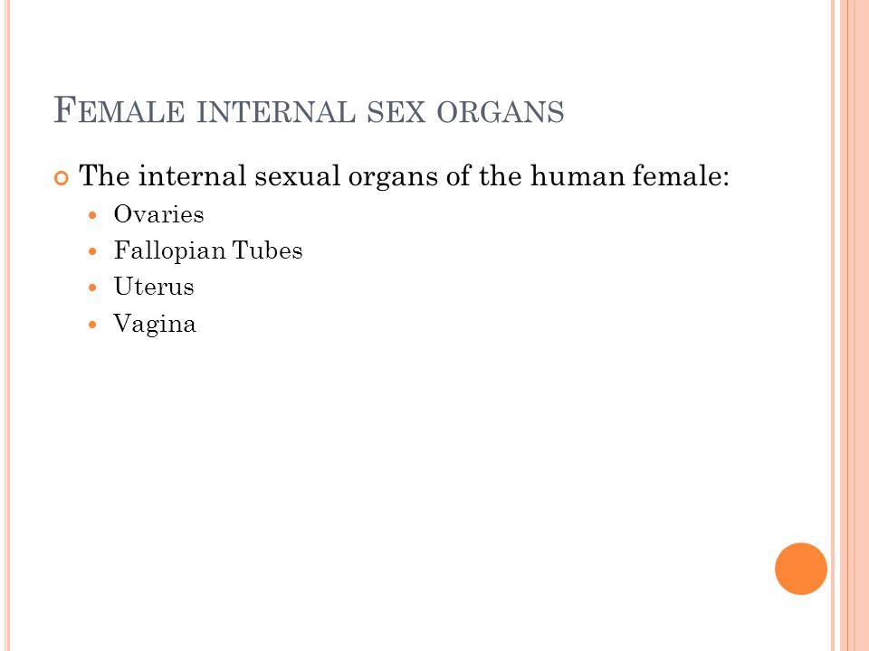 Female internal sex organs