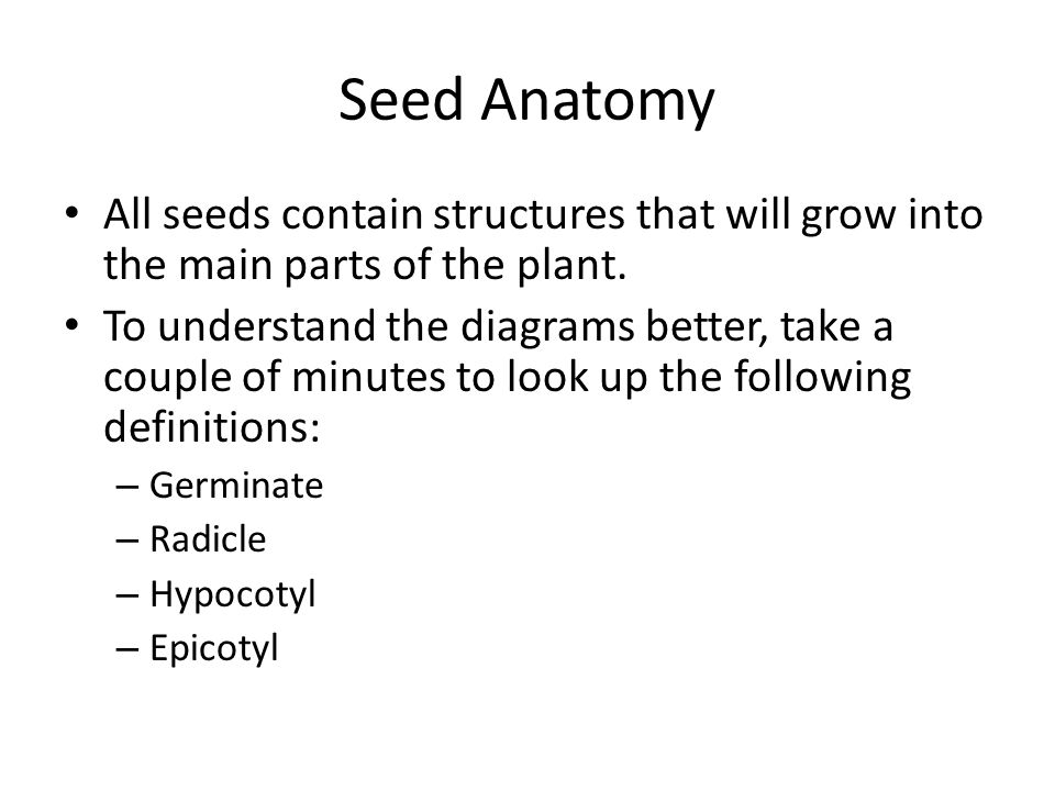 Seed Anatomy All seeds contain structures that will grow into the main parts of the plant.