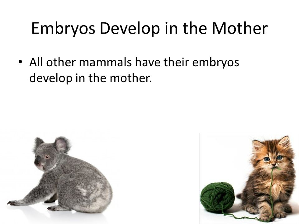 Embryos Develop in the Mother
