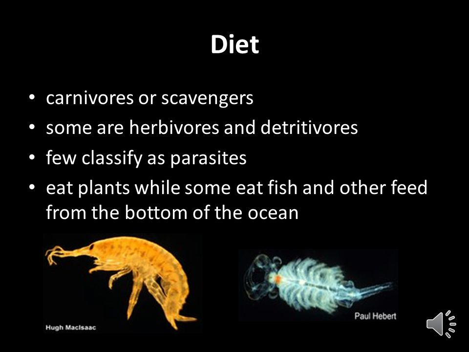 Diet carnivores or scavengers some are herbivores and detritivores