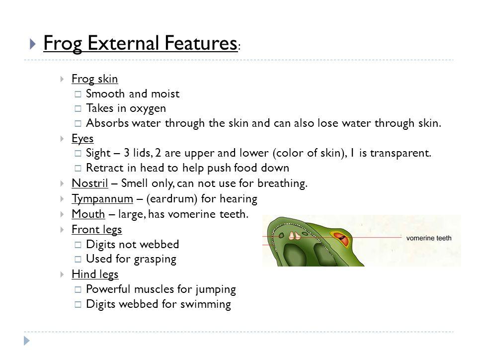 Frog External Features: