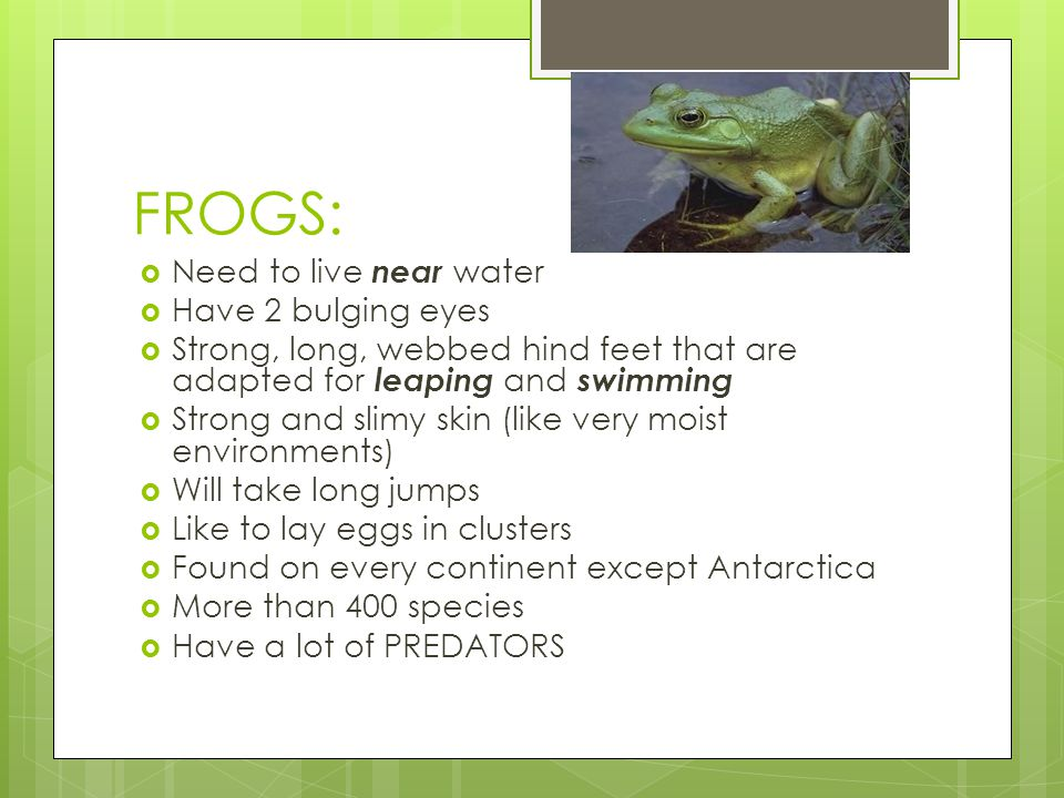 FROGS: Need to live near water Have 2 bulging eyes