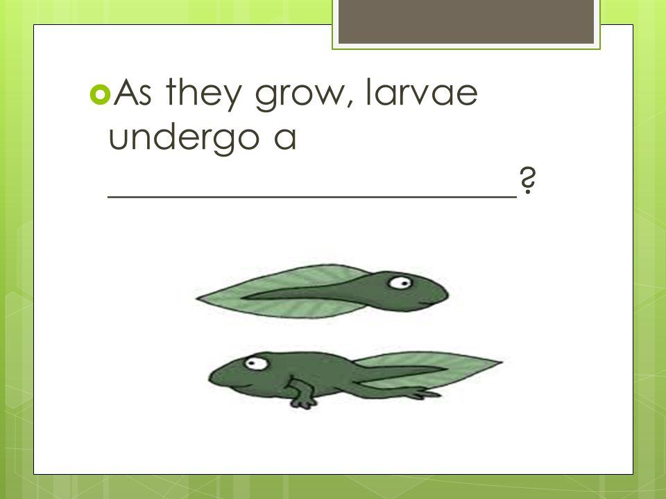 As they grow, larvae undergo a ______________________