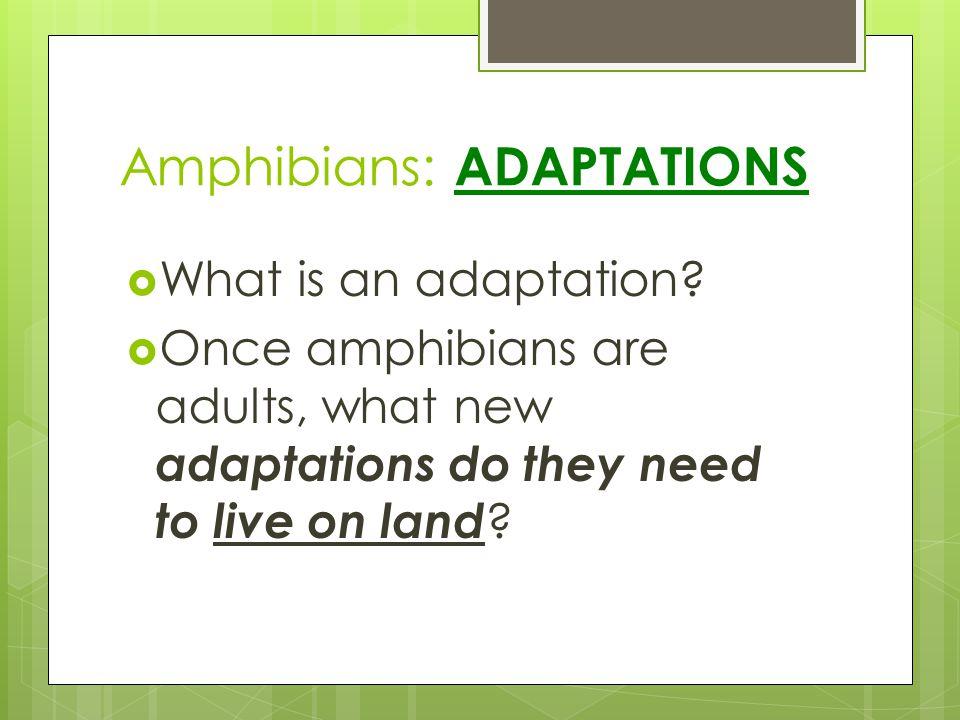 Amphibians: ADAPTATIONS