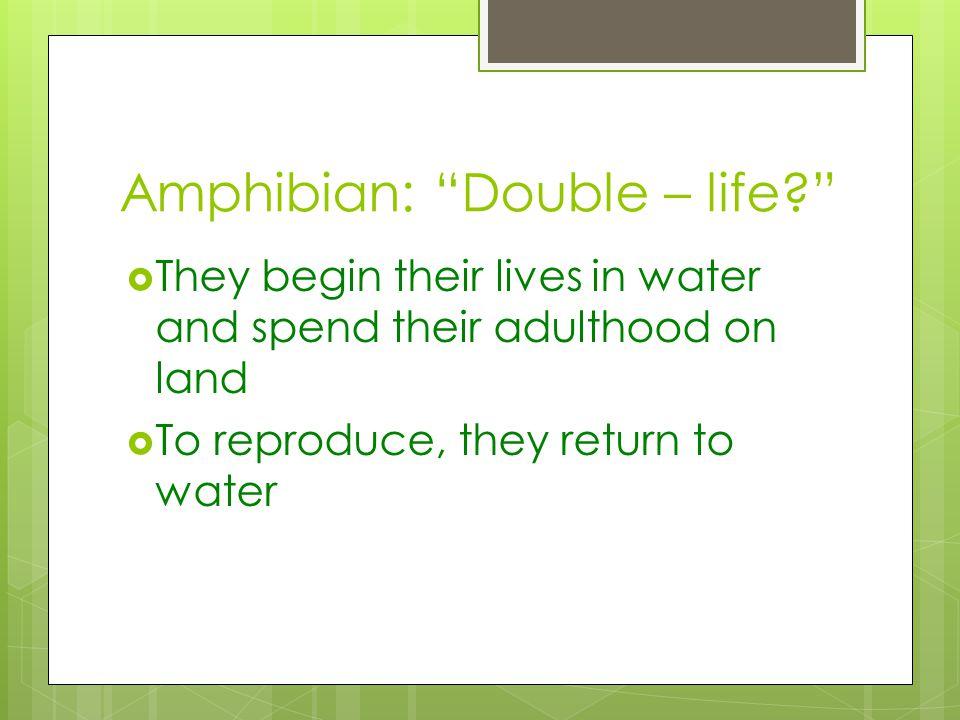 Amphibian: Double – life