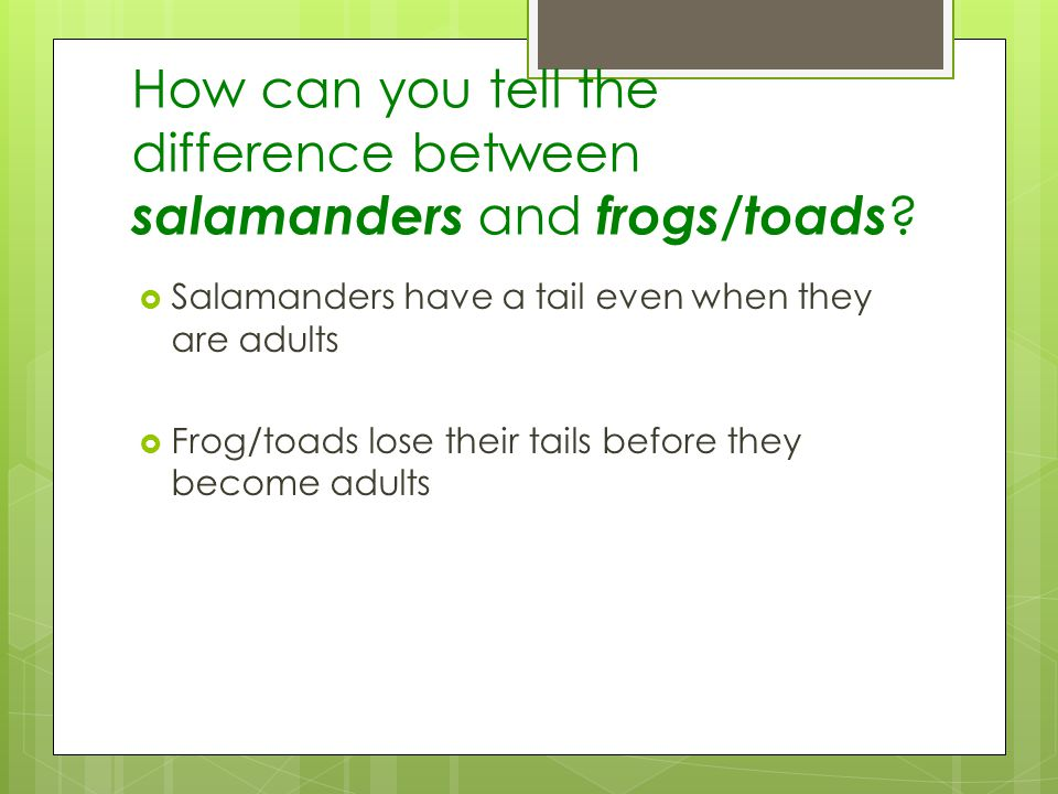 How can you tell the difference between salamanders and frogs/toads
