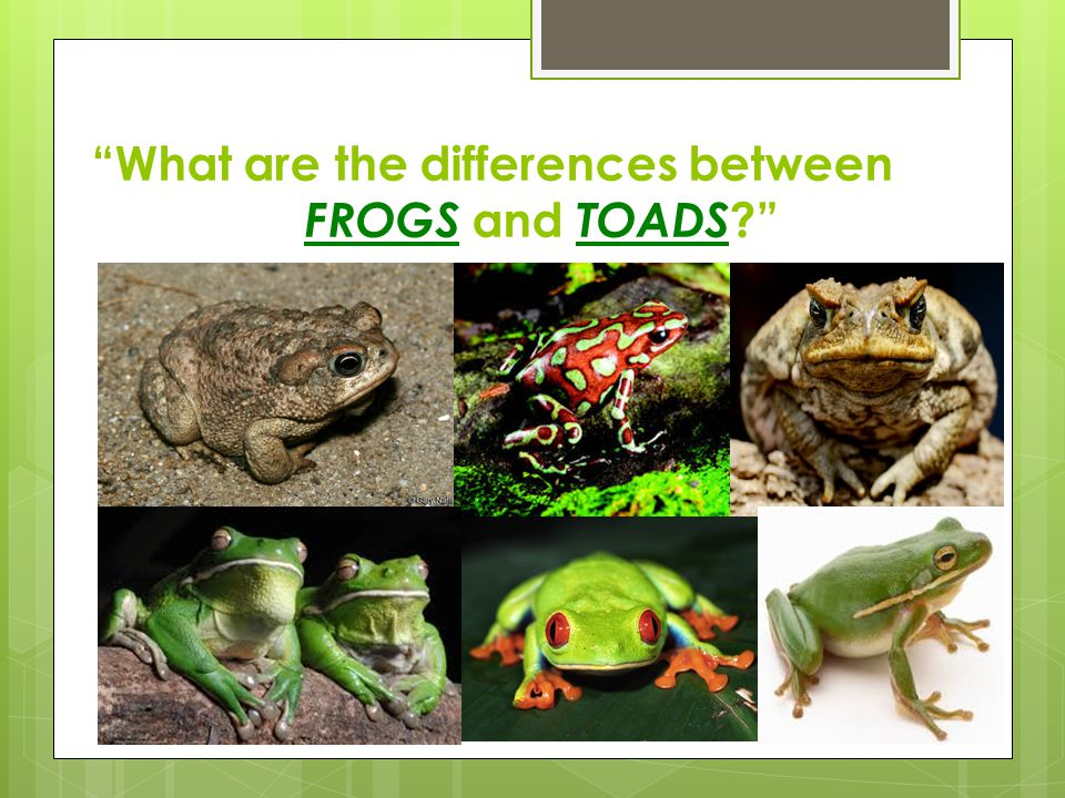 What are the differences between FROGS and TOADS