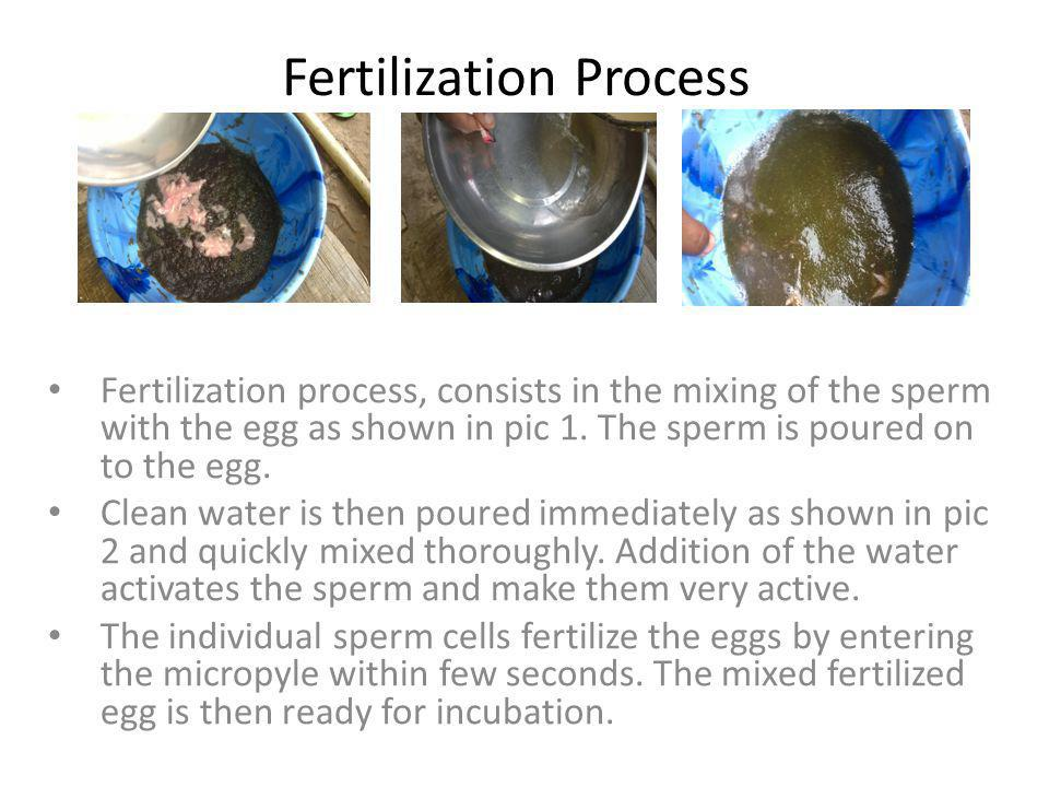 Fertilization Process