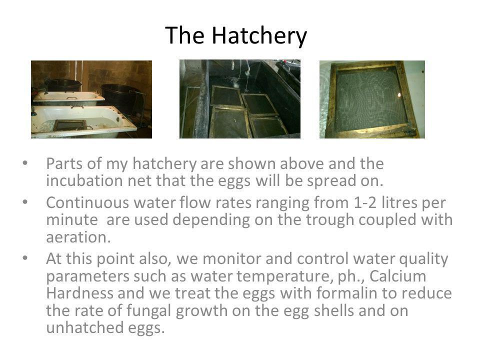 The Hatchery Parts of my hatchery are shown above and the incubation net that the eggs will be spread on.