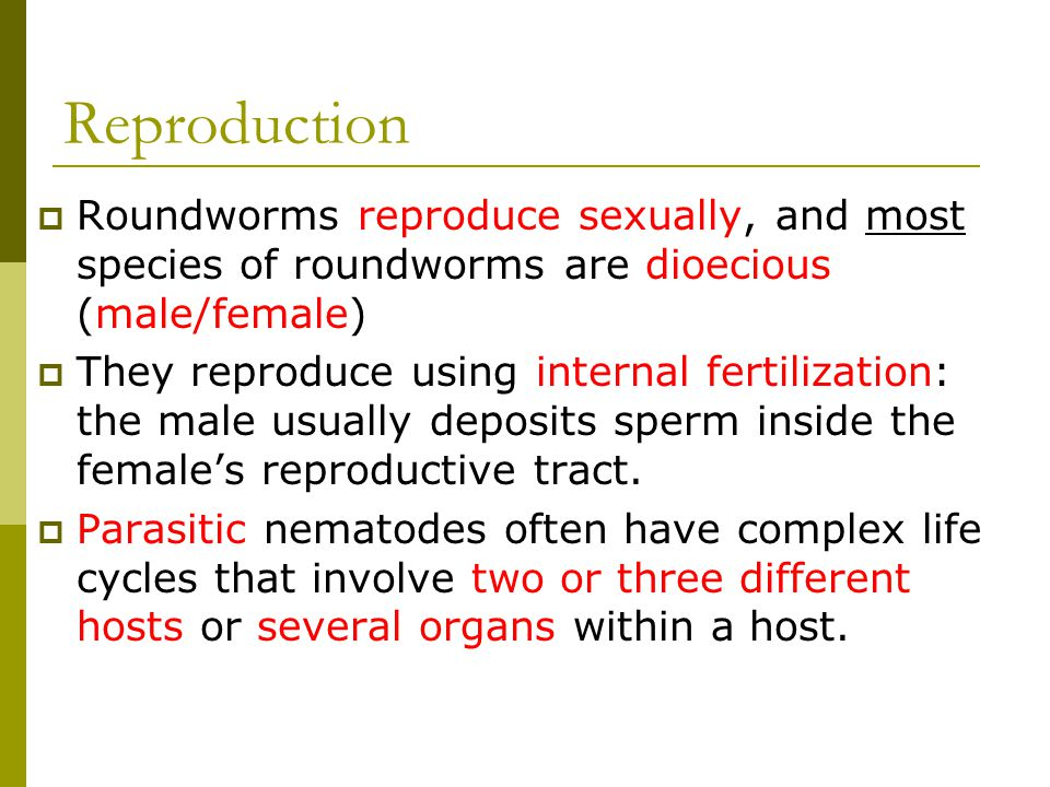 Reproduction Roundworms reproduce sexually, and most species of roundworms are dioecious (male/female)