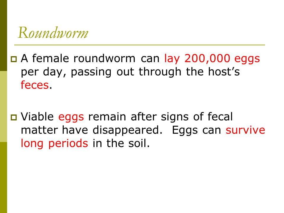 Roundworm A female roundworm can lay 200,000 eggs per day, passing out through the host's feces.