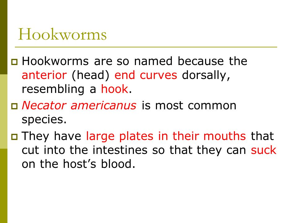 Hookworms Hookworms are so named because the anterior (head) end curves dorsally, resembling a hook.