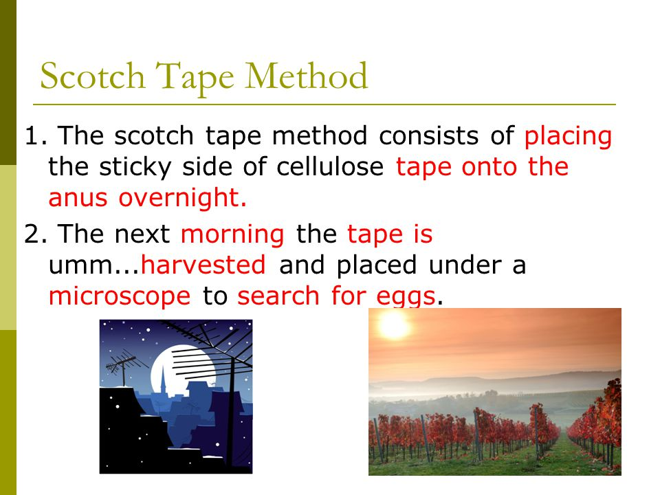Scotch Tape Method 1. The scotch tape method consists of placing the sticky side of cellulose tape onto the anus overnight.