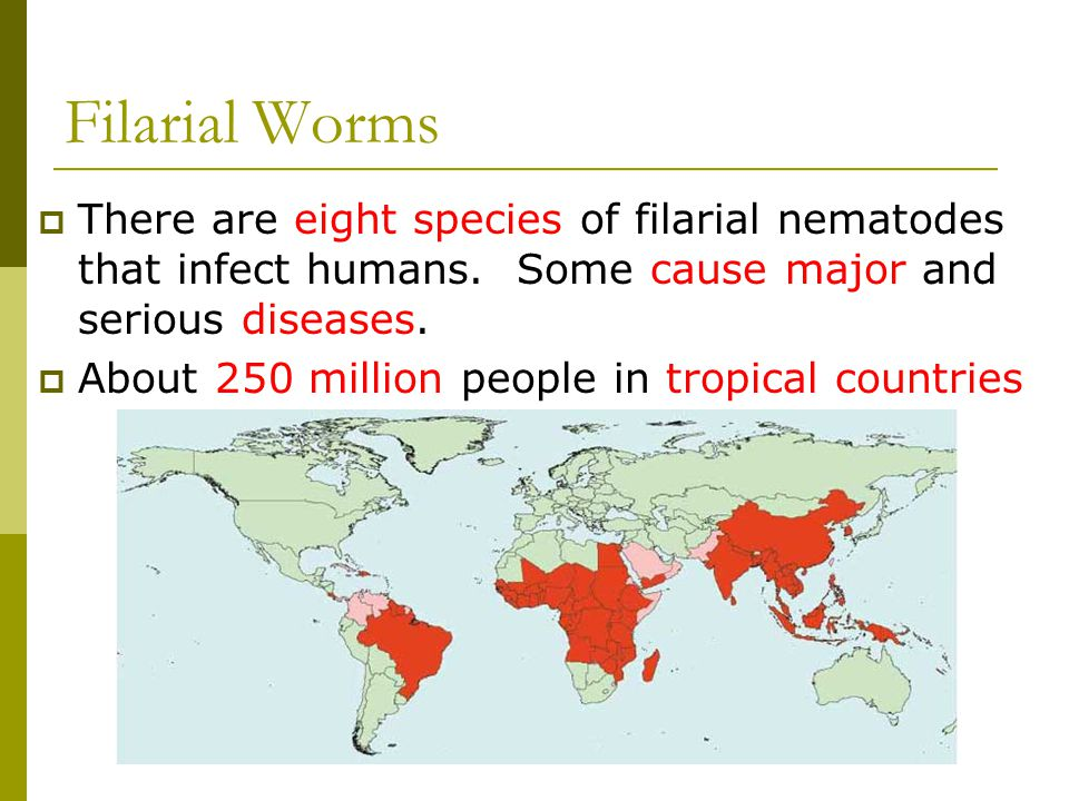 Filarial Worms There are eight species of filarial nematodes that infect humans. Some cause major and serious diseases.
