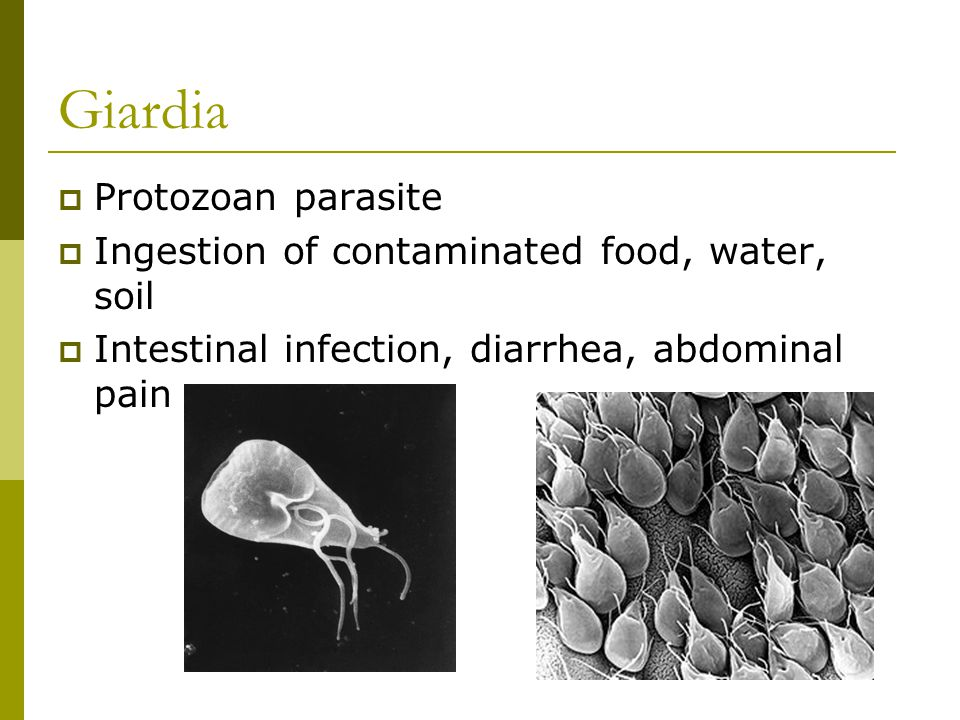 Giardia Protozoan parasite Ingestion of contaminated food, water, soil