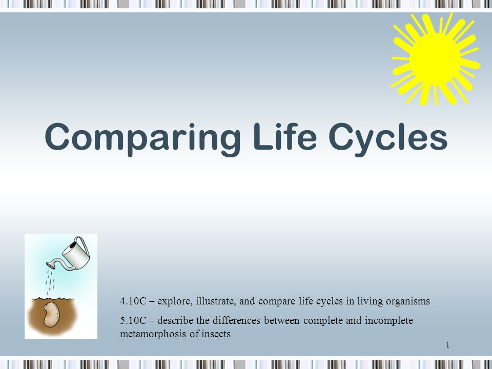 Comparing Life Cycles 4.10C – explore, illustrate, and compare life cycles in living organisms.