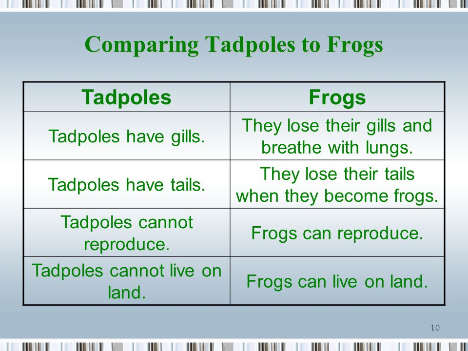 Comparing Tadpoles to Frogs