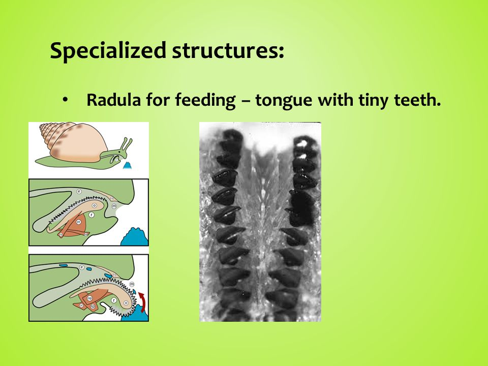 Specialized structures:
