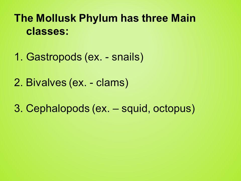 The Mollusk Phylum has three Main classes: