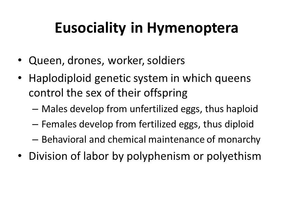 Eusociality in Hymenoptera