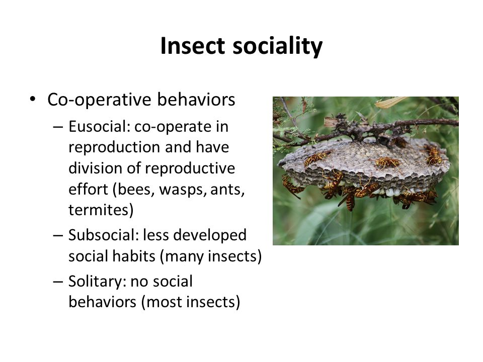 Insect sociality Co-operative behaviors